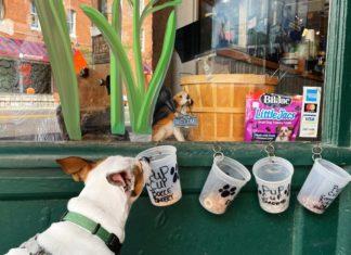 dog places